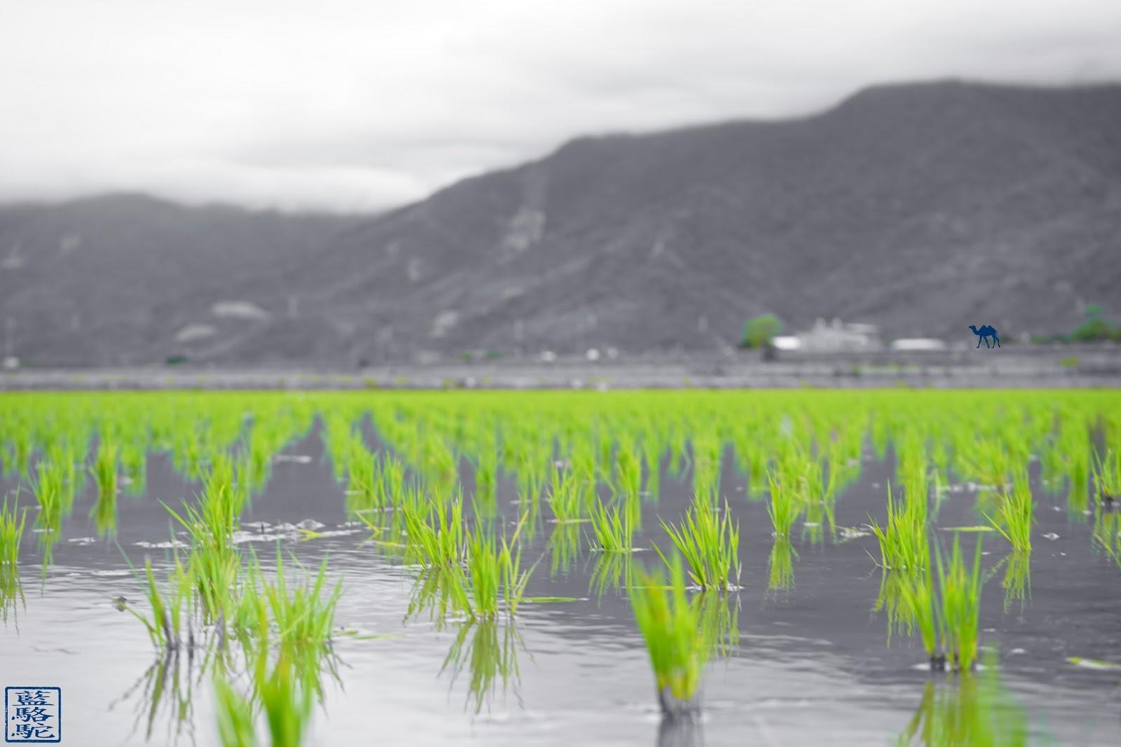 Le Chameau Bleu - Shichang vu des rizieres - Voyage vélo à Taiwan