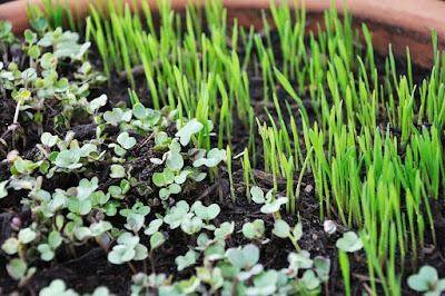 Faktor yang Mempengaruhi Pertumbuhan Tumbuhan & Perkembangan