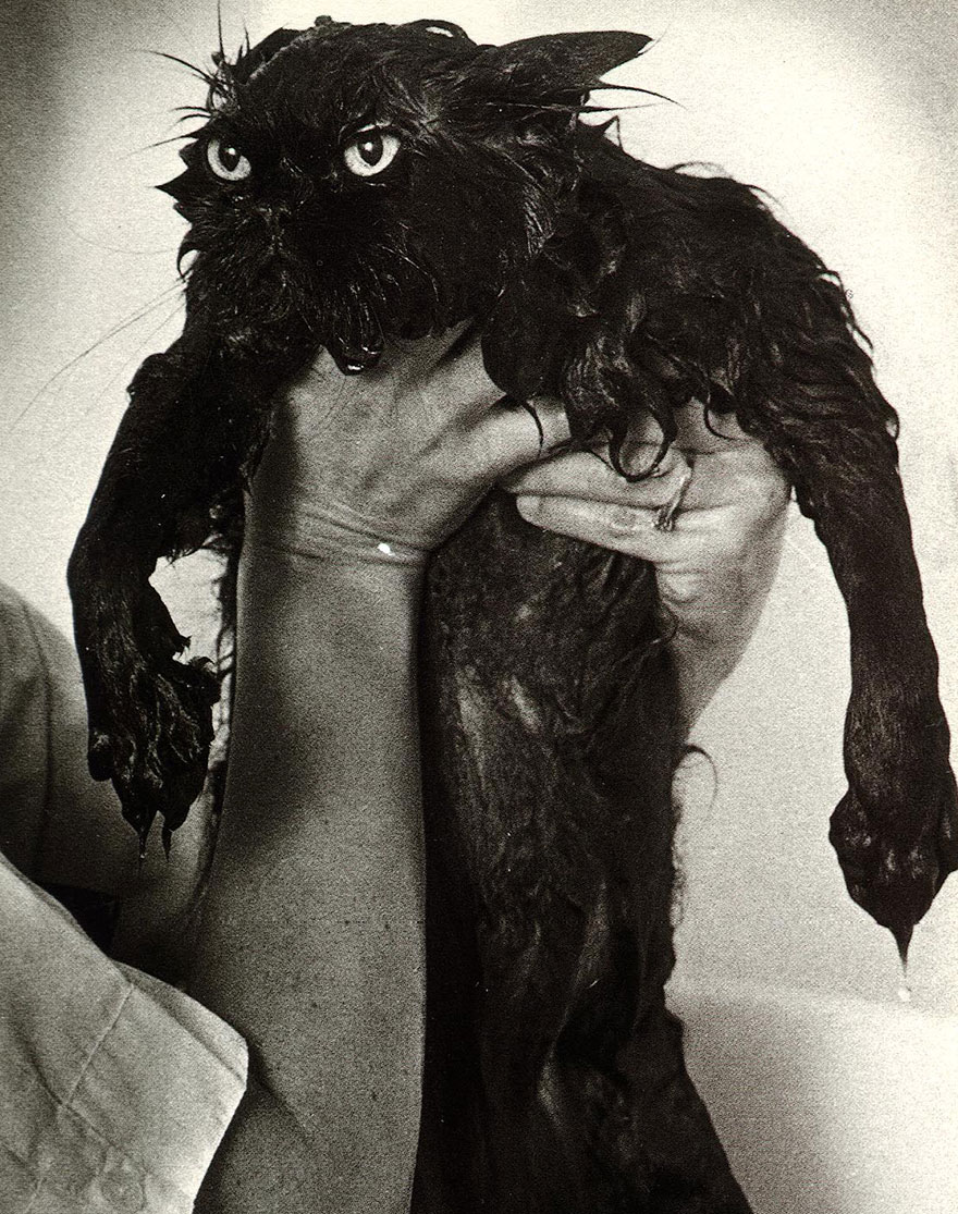 funny-wet-cats-13