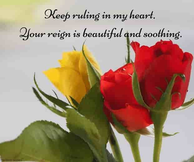 good morning text message to my king with roses