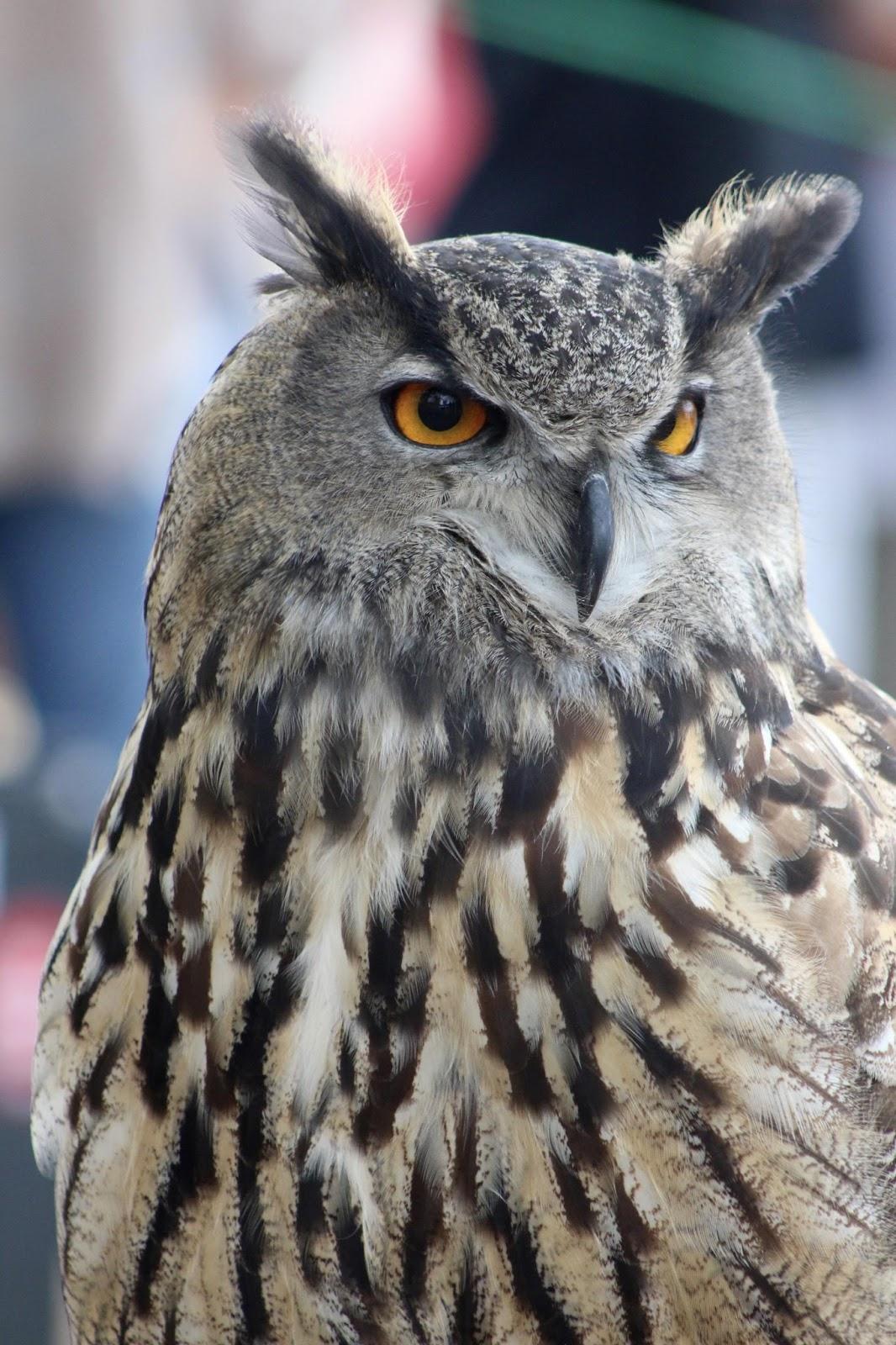 lark or owl