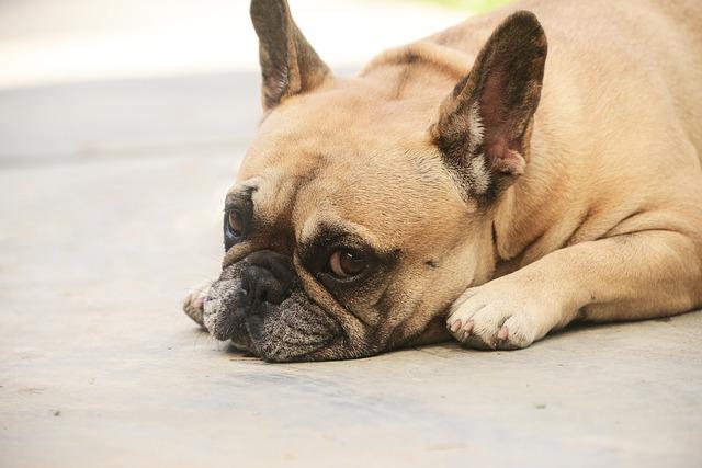 droit-des-animaux-personnalité-juridique-chien