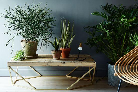 Ambientes decorados con plantas de interior