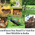 Tourist Places You Need To Visit For The Best Wildlife in India
