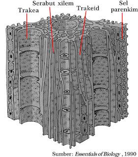 bagian bagian jaringan xilem