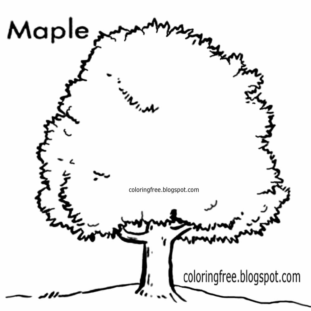 Printable Easy Woodland Canada Coloring Pictures Maple Tree Countryside Wildlife Drawings With Words