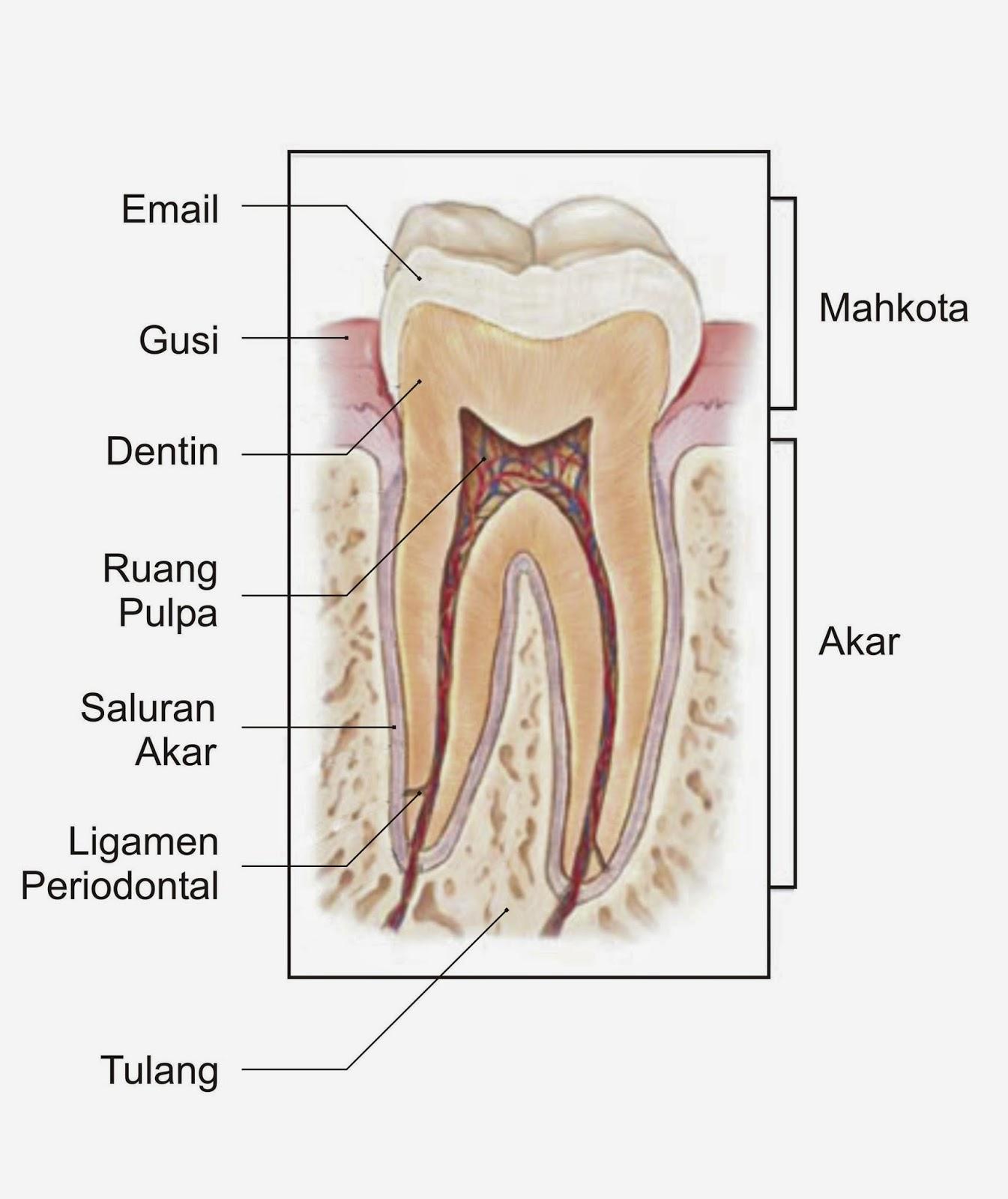 Obat Sakit Gigi Tradisional Resep Dokter Paling Ampuh