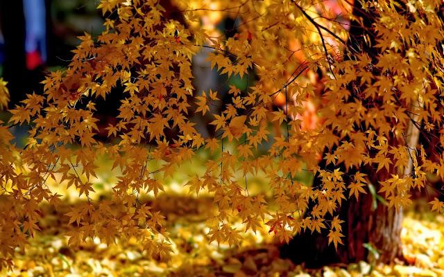 Achtergrond met boom met gele bladeren