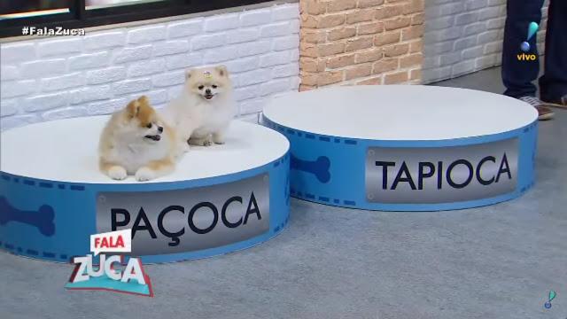 Os cãozinhos Tapioca e Paçoca ignoram seus espaços determinados e resolvem ficar juntos