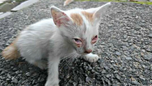 9 Penyakit Pada Kucing Kampung Dan Cara Mengobatinya