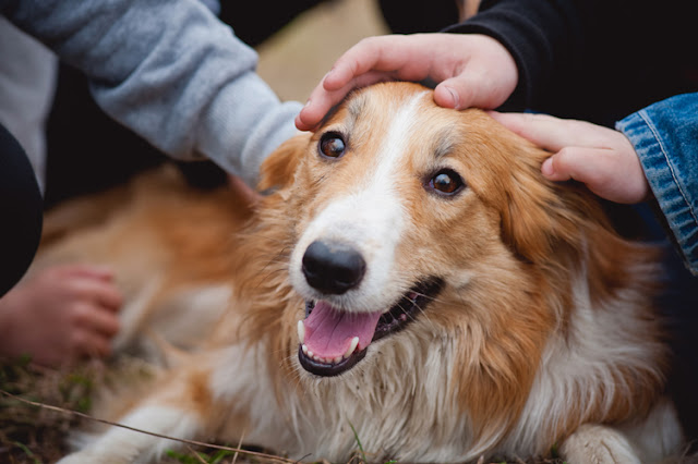 Dogs respond differently to affection from familiar vs unfamiliar people