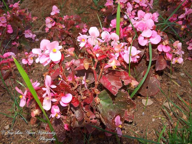 Roses (Girona).