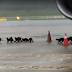 一群水濑居然来到新加坡樟宜机场停机坪