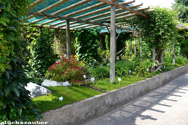 gl ckszauber botanischer garten regensburg. Black Bedroom Furniture Sets. Home Design Ideas