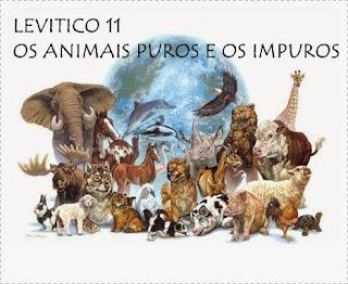 Os animais puros e os impuros em Levitico 11