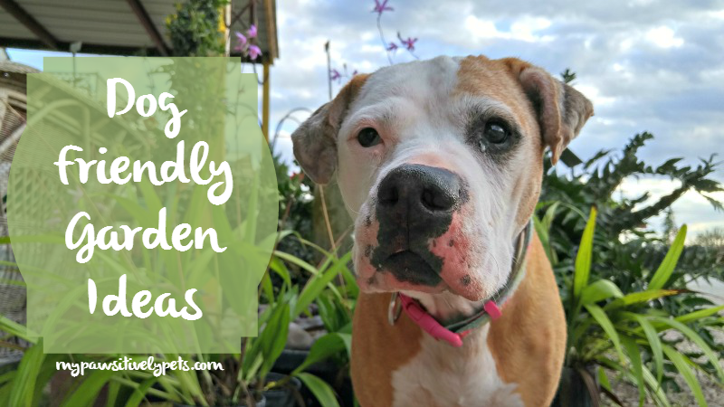 Garden Ideas For Dogs what to plant for a dog-friendly garden | pawsitively pets