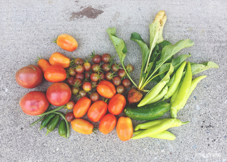 Late Summer Harvest // Garden Update: September 2018 // www.thejoyblog.net