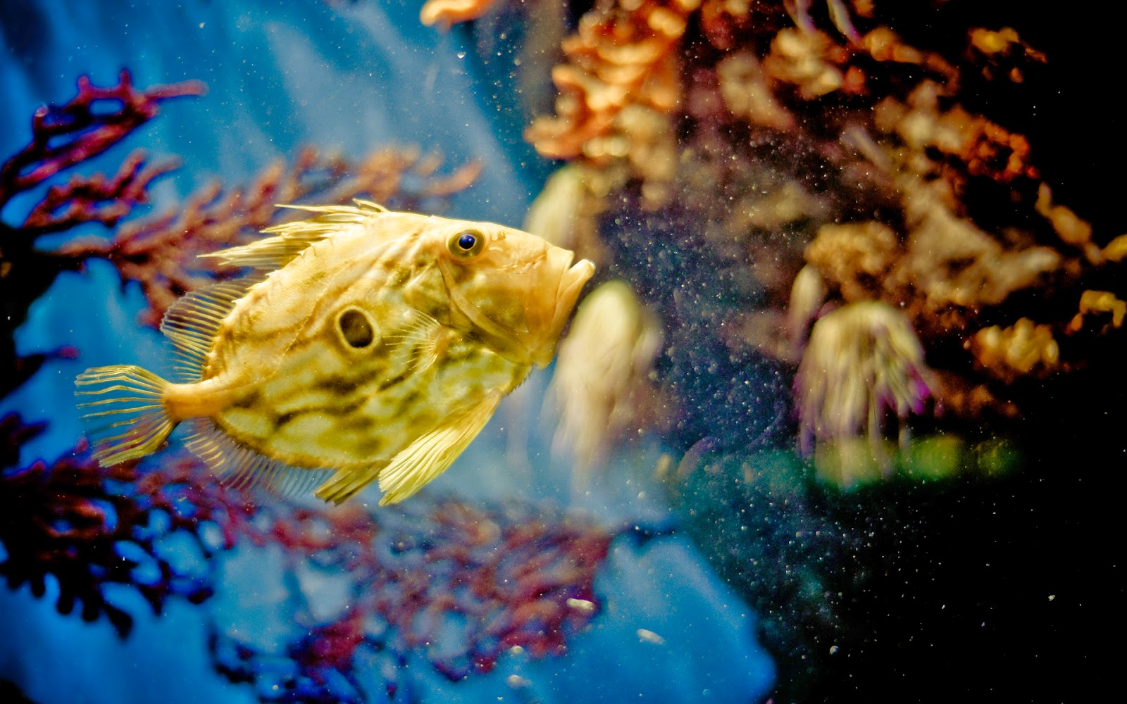 awesome-under-water-colorful-fish-HD-photo-gallery.jpg