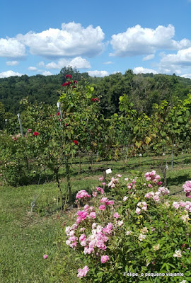 Vinícola Dal Pizzol em Bento Gonçalves: conhecendo o Ecomuseu da Cultura do Vinho e o Vinhedo do Mundo
