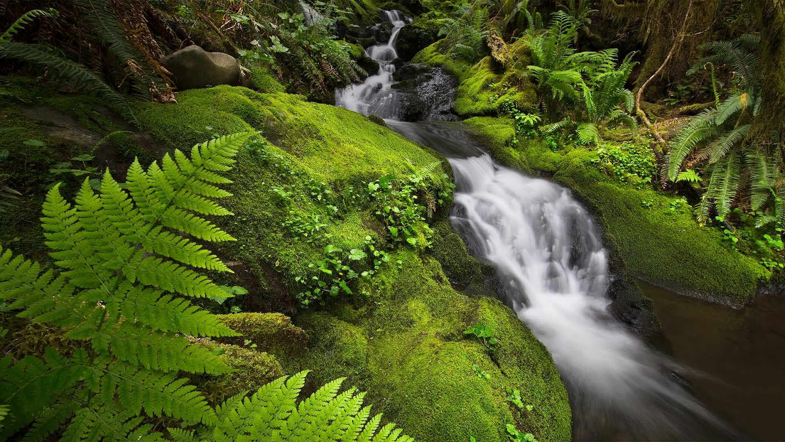 Quinault Rainforest in Olympic National Park, Washington © Jason Savage/Tandem Stills + Motion