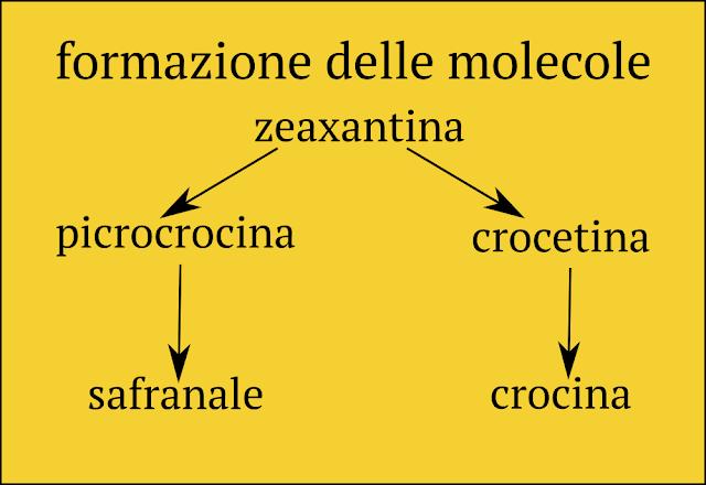 formazione molecole zafferano