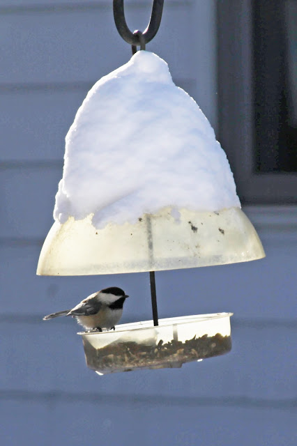 Winter, chickadee, bird feeder, snow, Anne Butera, My Giant Strawberry