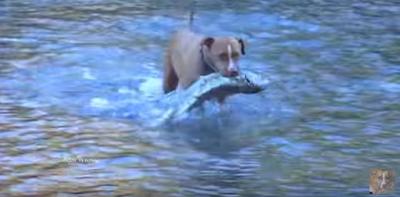 Τι παιδεύεσαι με τα καλάμια και τα αγκίστρια; Πάρε τον σκύλο σου και πήγαινε για ψάρεμα video