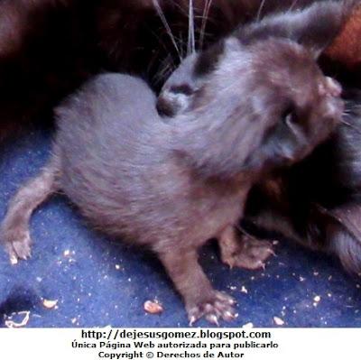 Foto de un gato recien nacido por Jesus Gómez