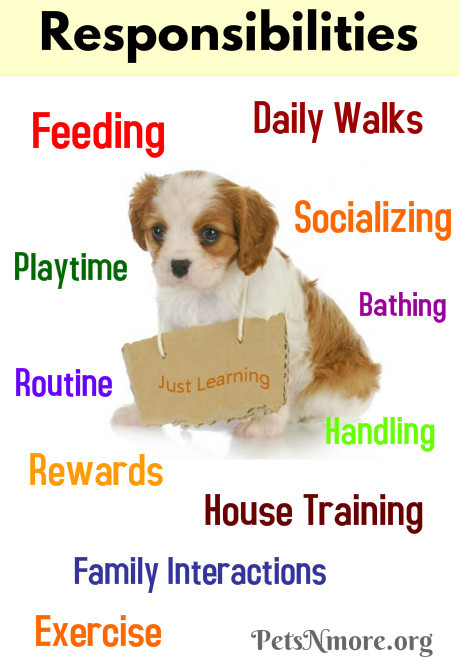 pets n more why pets don t make good holiday gifts