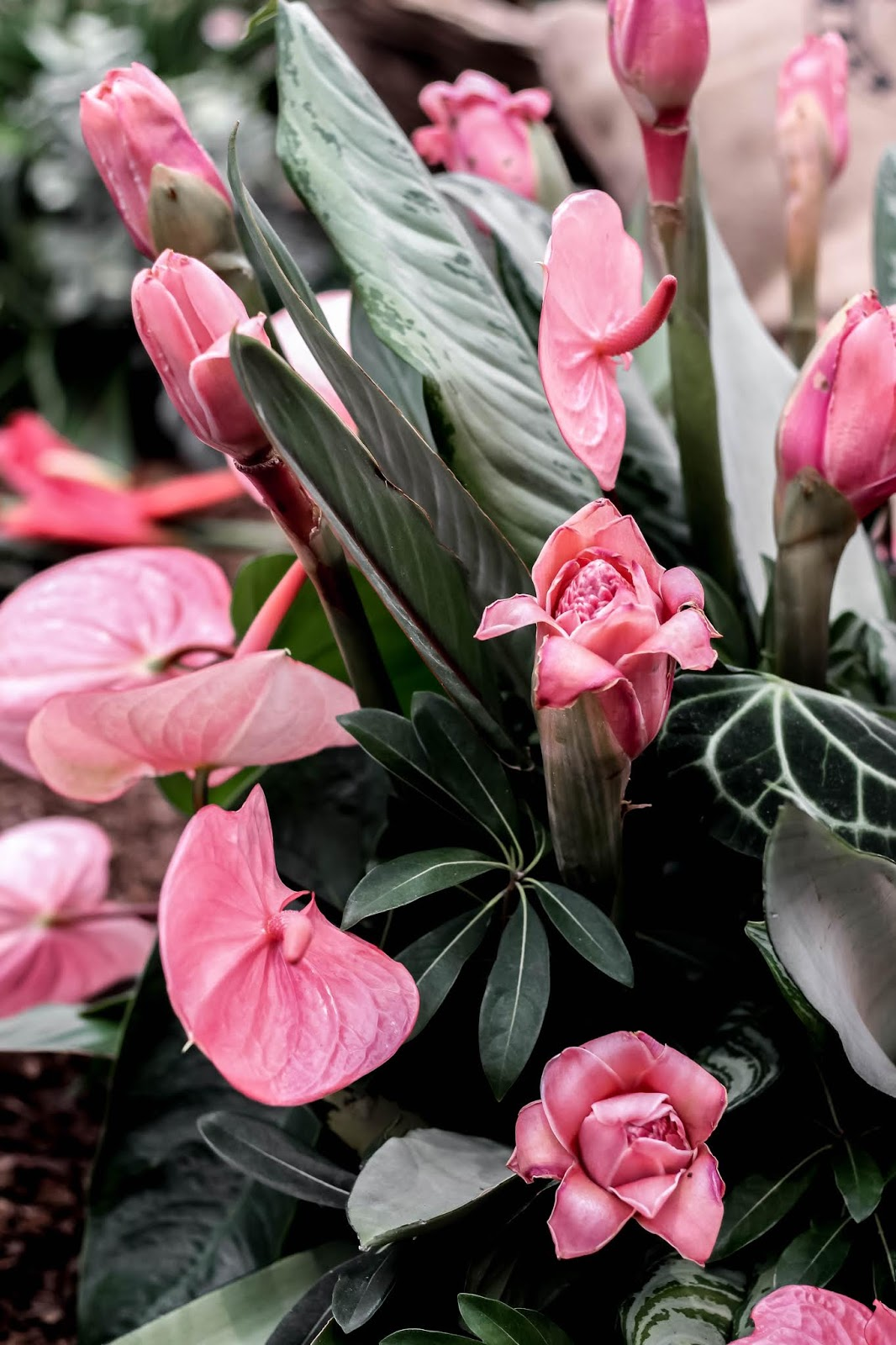Tropical Pink Flowers at the Chelsea Flower Show 2018