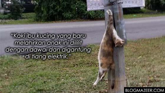 Kucing Baru Beranak Dililit Dawai, Digantung Di Tiang Elektrik