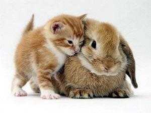 kitten&rabbit