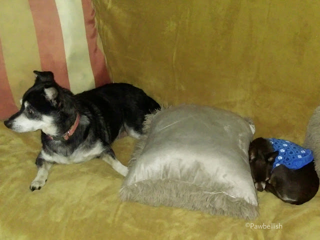Couch and pillow covers protect your furniture from dog fur and pet dander.