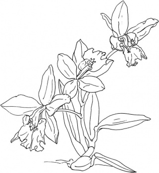orchid flower coloring pages | Coloring Pages for Kids: Orchid Flower Coloring Page