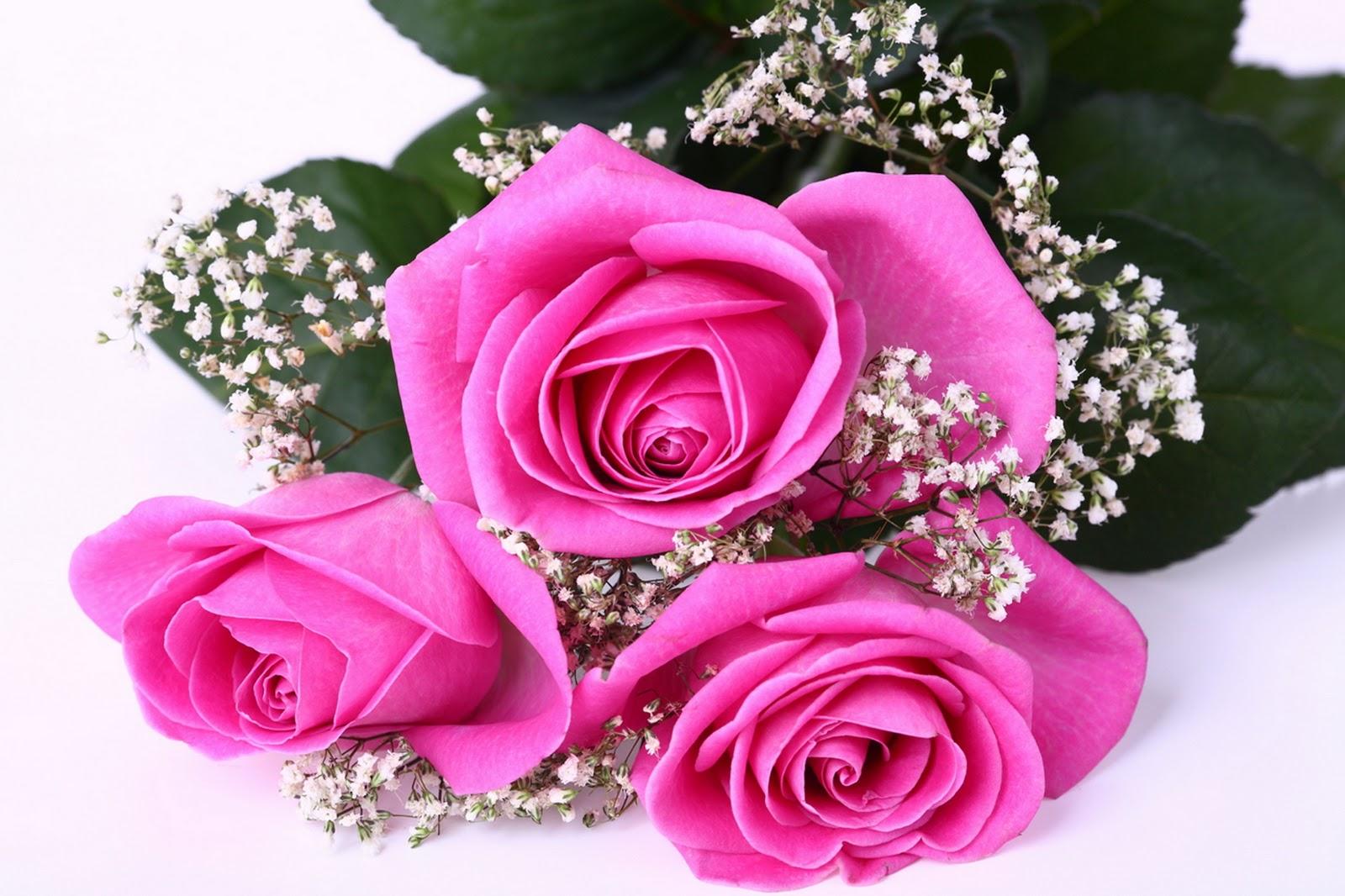Gambar Bunga Mawar yang CantikCantik