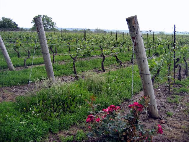Ontario Wine - wine tasting - Niagaria area