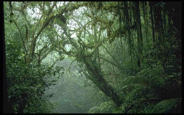 Tropical Rainforest And Monsoon Forest Basic Knowledge Of