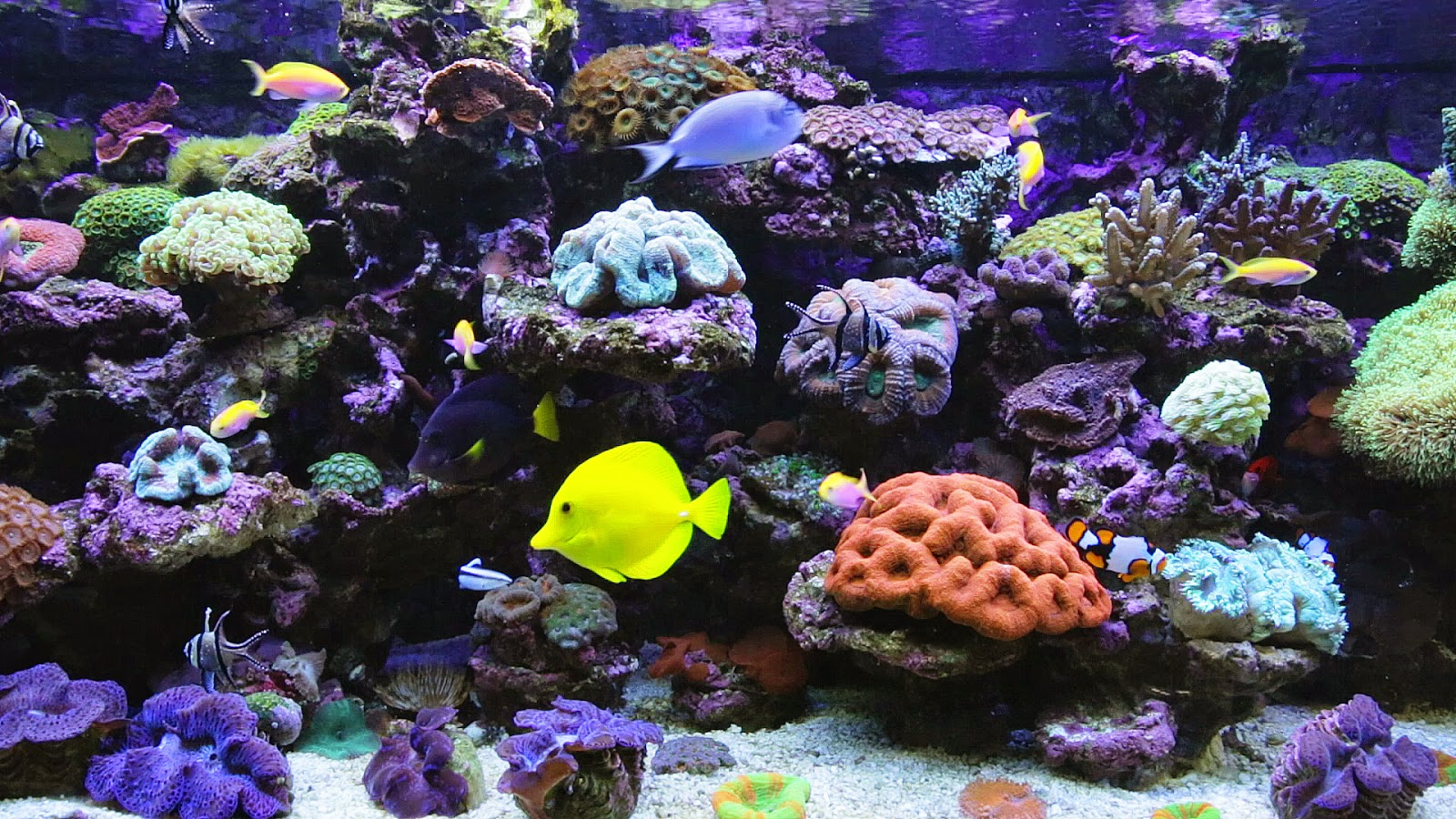 Real Aquarium Desktop Wallpaper 1920 x 1080