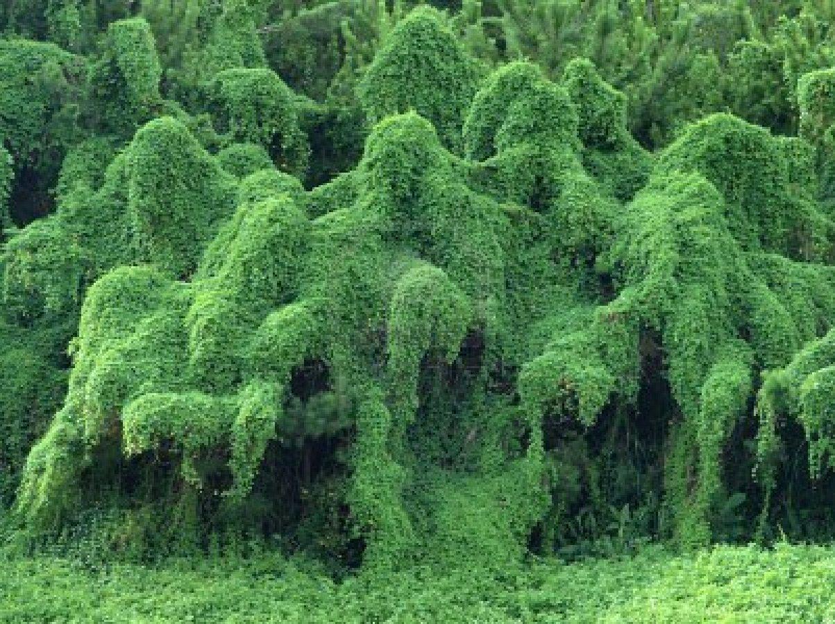 Monster Trees Pics
