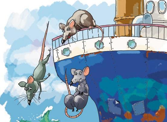Resultado de imagem para ratos navio