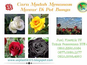 Manfaat Plastik Uv - Cara Gampang Menanam Mawar Di Pot Bunga