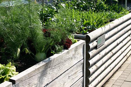 Gartensaison Ist Immer Gartentipps Von Eva Schumann Hochbeete