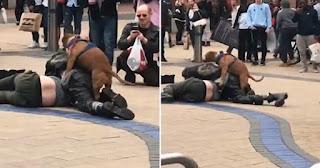 Άντρες πλακώθηκαν στη μέση του δρόμου και σκύλος βρήκε ευκαιρία και τους... καβάλησε (Βίντεο)