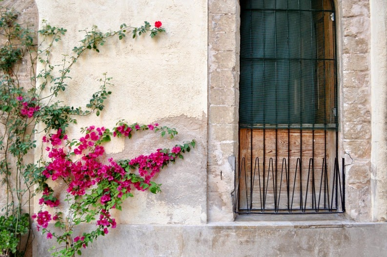 Colourful flowers in Palma
