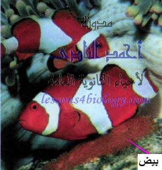 التلقيح الخارجى - الأسماك العظمية- التكاثر الجنسى