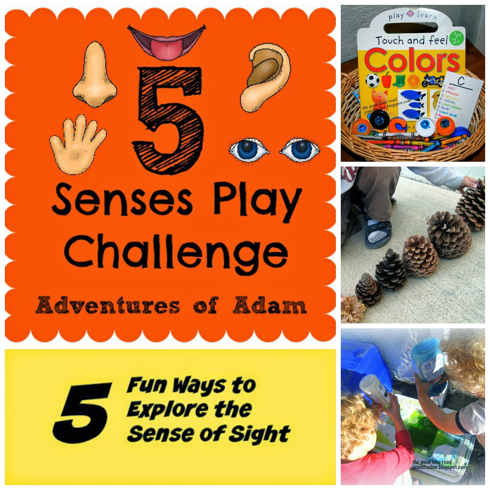 Learning The Five Senses Series