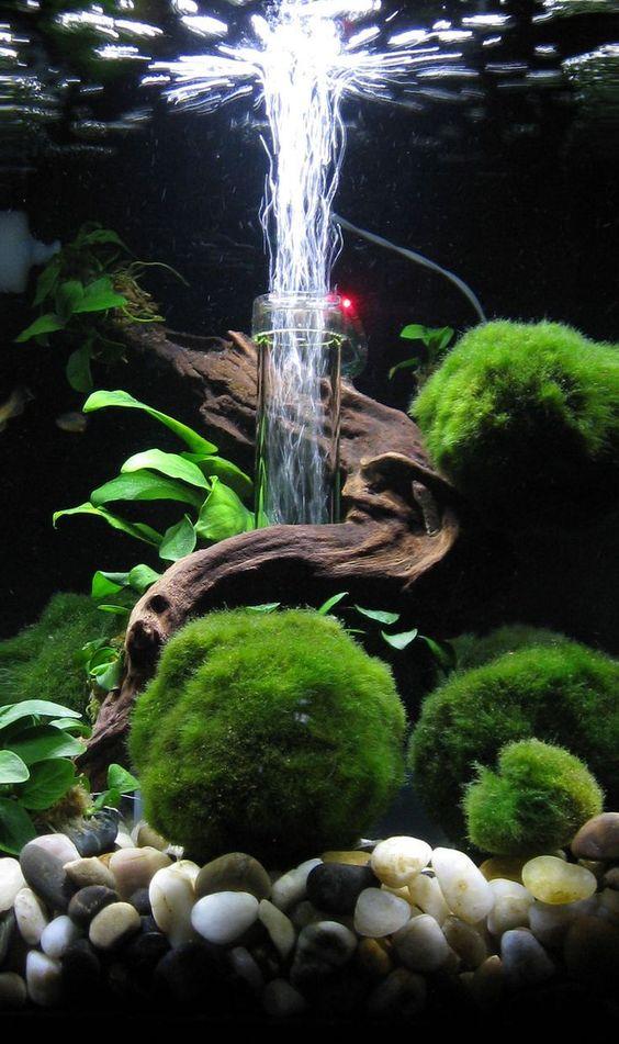 Phụ kiện thủy sinh - quả cầu rêu Moss Ball