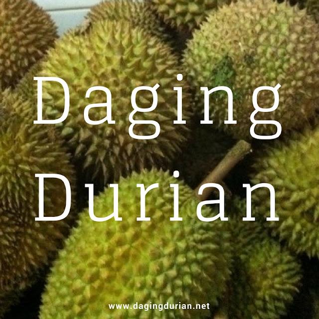 gudang-daging-durian-medan-berkualitas-di-humbang-hasundutan