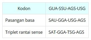 Catatan sintesis protein un materi biologi sma lengkap karena timin diganti urasil maka pasangan basanya adalah adenin urasil a u guanin sitosin g s ccuart Images