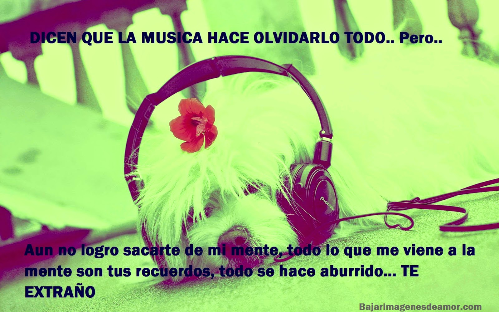 Best Imagenes De Amor Con Frases Y Movimiento Y Musica Image Collection